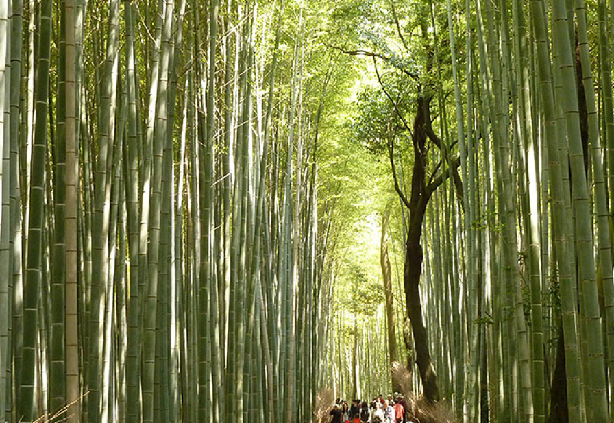 Bamboo forest Park Kyoto