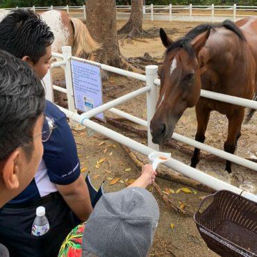 animal farms in singapore